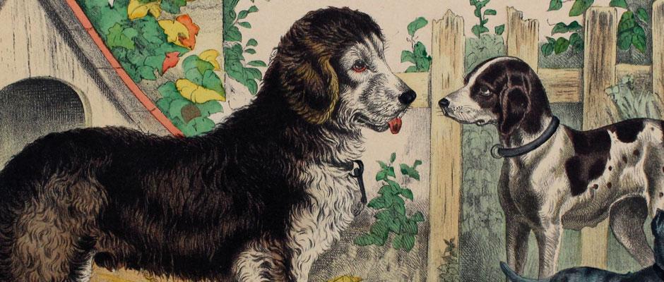 hundkatzemaus – Tierdarstellungen aus aller Welt auf Populärer Druckgrafik